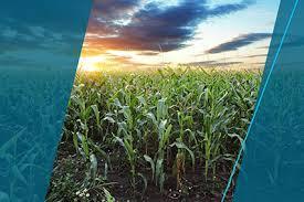 <b>Средства защиты растений</b> от болезней, сорняков и вредителей