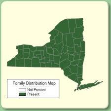 Lycopodiaceae - Family Page - NYFA: New York Flora Atlas - NYFA ...