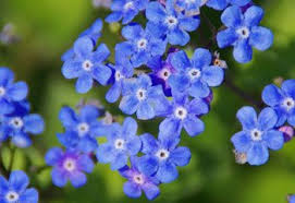 41 Types of <b>Blue Flowers</b> - ProFlowers Blog