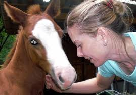 <b>Birger Gieseke</b> - EQS-Horsemanship Instruktor - gal_cimg0134_1362308353