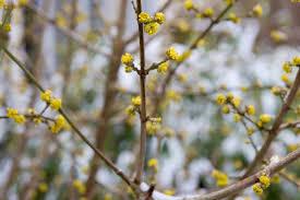 Plants for an East-Facing Border - BBC Gardeners' World Magazine
