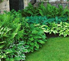 Small Picture Best 25 Shade garden ideas on Pinterest Shade plants Shade