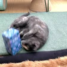 Pukka Herbs - Why do cats love our <b>Night Time tea</b>? The...