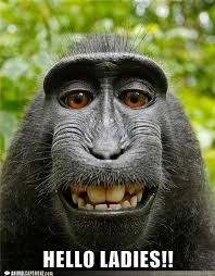 Image result for funny critters