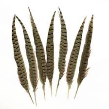 <b>Pheasant Feathers</b> NZ | Buy New <b>Pheasant Feathers</b> Online from ...