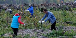 <b>Autumn Forest</b> Restoration Campaign Launches in Vyksa