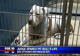 Anjing Dipenjara Seumur Hidup
