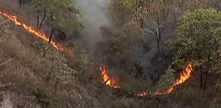 Resultado de imagen para fotos de incendios forestales en republica dominicana