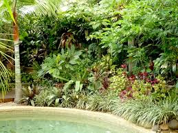 Small Picture 144 best Tropical garden images on Pinterest Tropical plants