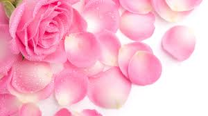 beautiful fresh pink rose petals wallpaper beautiful fresh home