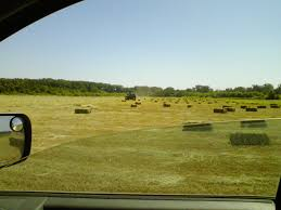 oak hill homestead we feed the loose hay we cut from our hayfield but we buy and store bales for the winter too we ve never managed to store enough of our own hay to