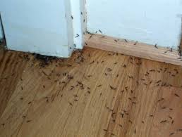 Termites destroy houses