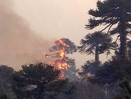 Resultado de imagen de incendio china muerta