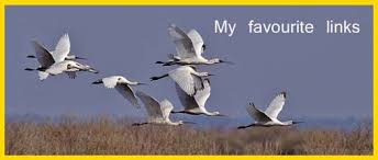 Image result for favourite links images