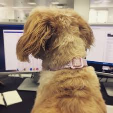 totally resume builder resume template samples examples totally resume builder speedy resume linkedin take your dog work day employer isn down
