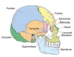 Résultats de recherche d'images pour «ostéopathie poyet»