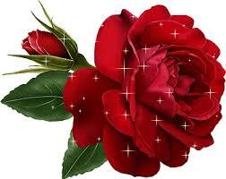 Resultado de imagen de rosas