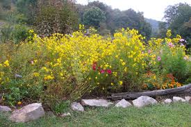 Small Picture Garden Design Garden Design with Diary of a Wildflower Garden