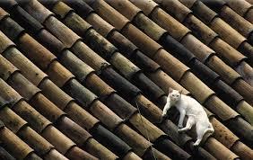 Resultado de imagem para gatos no telhado