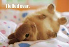 Bunny Meme on Pinterest | Funny Animal Pictures, Funny Animal ... via Relatably.com