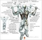 Упражнения для мышц домашних условиях