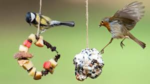 Make a <b>bird feeder</b> - CBeebies - BBC
