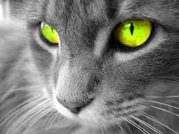 Resultado de imagen para fotos de gatos