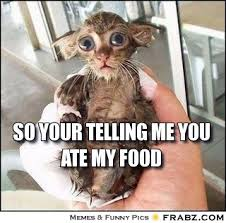 so your telling me you ate my food... - Pitiful Creature Meme ... via Relatably.com