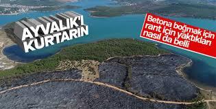 Ayvalık'taki orman yangınında zarar gören alan