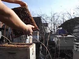 Картинки по запросу весной слабые пчелиные