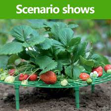 Strawberry Plant Support, Strawberry Growing ... - Amazon.com