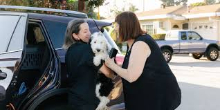 Need a Pandemic <b>Puppy</b> ASAP? Call the Bernedoodle Delivery ...