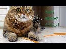 The best <b>funny</b> kitten, mom <b>cat</b>, <b>cute cat</b> , Happy birthday Coco ...
