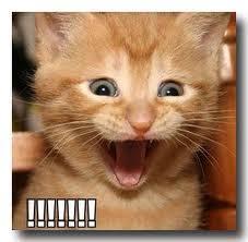 excited kitten | Tumblr via Relatably.com