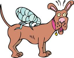 Image result for flea cartoon