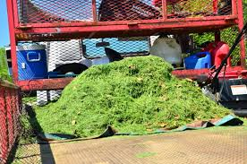 lawn care and landscaping blog do you have your clippings bagged when your lawn is cut each week a bagged lawn always looks slightly better but who should have to deal the