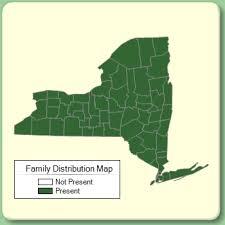 Liliaceae - Family Page - NYFA: New York Flora Atlas - NYFA: New ...