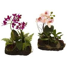 day orchid decor: orchid island set of  p orchid island set of