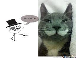 Posh Cat by ashley.arthur.9 - Meme Center via Relatably.com