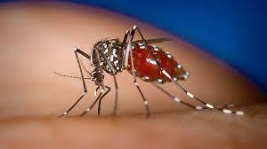 Resultado de imagen para 53 muertes por dengue durante el año 2015