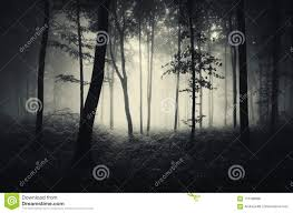 Dark <b>Mysterious Forest</b> On <b>Halloween</b> Stock Photo - Image of fairy ...