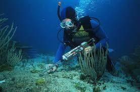 Image result for biology marine