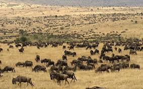 Resultado de imagen de africa manadas de animales