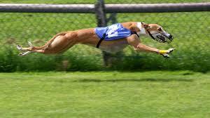 Ποια είναι τα ταχύτερα ζώα;