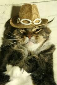 Image result for cat dressed spring fashion