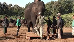 Myanmar Timber <b>Elephant</b> Project