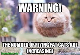 Memes Vault Funny Fat Cat for Memes via Relatably.com