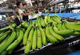 Banana exports seen to boost PHL's banana industry