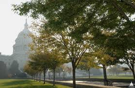 <b>Trees</b> on Capitol Grounds | Architect of the Capitol