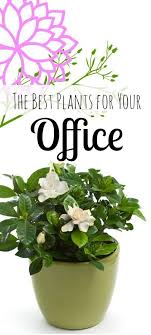 the 6 best plants for a healthy office rodalenews brisbane office plants